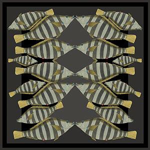 dark stripy kissing fish silk twill scarf design for sidebar