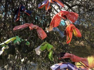 colorful long skinny silk scarf tied around the tree branches
