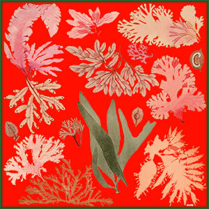 red floating algae printed silk scarf design