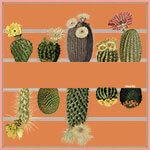 cactus and stripe printed terra-cotta color silk scarf design